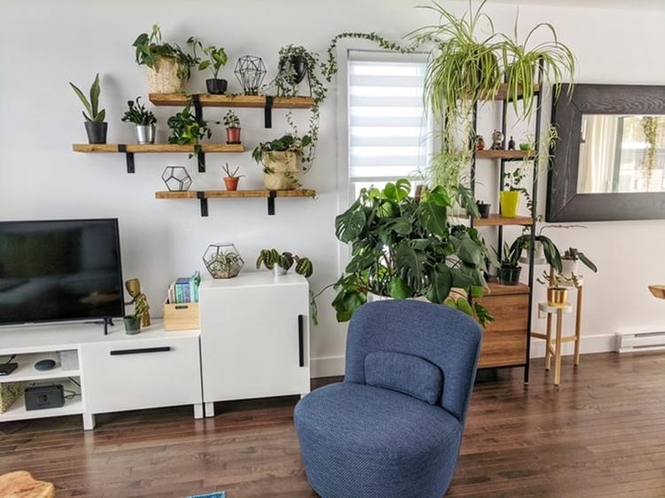 janiszewska marta-suwałki-home staging-jak urządzić wynajmowane mieszkanie-rośliny wsalonie