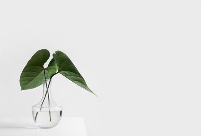 ruda chata-blog-bardziej eko-domowe nawyki-codzienne nawyki-roślina w szkle