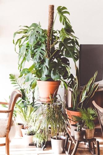ruda chata-blog-jakość powietrza wdomu-rośliny wdomu-rośline doniczkowe-plants at home